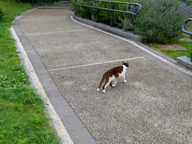 草むらを走る猫3