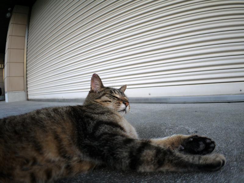 ガレージ前のキジトラ猫2