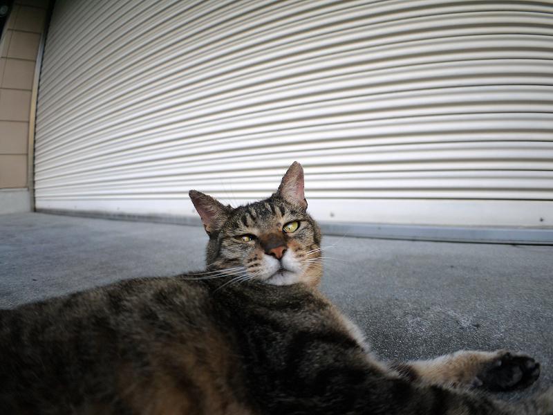 ガレージ前のキジトラ猫3