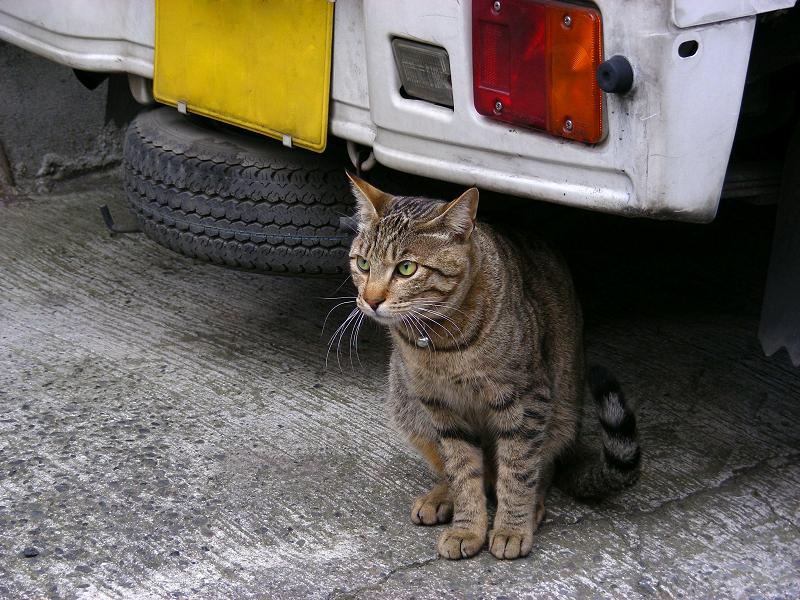 車の下のキジトラ猫
