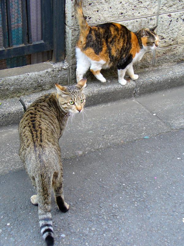 三毛猫とキジトラ猫