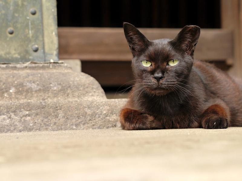 ユニークな黒猫1