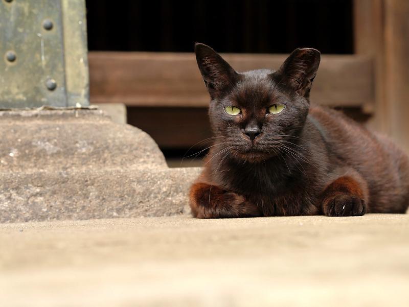 ユニークな黒猫2