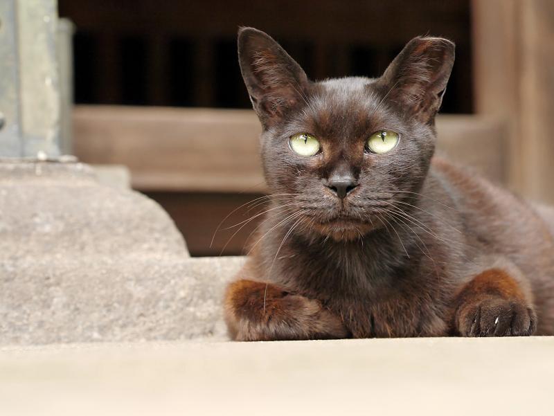 ユニークな黒猫3