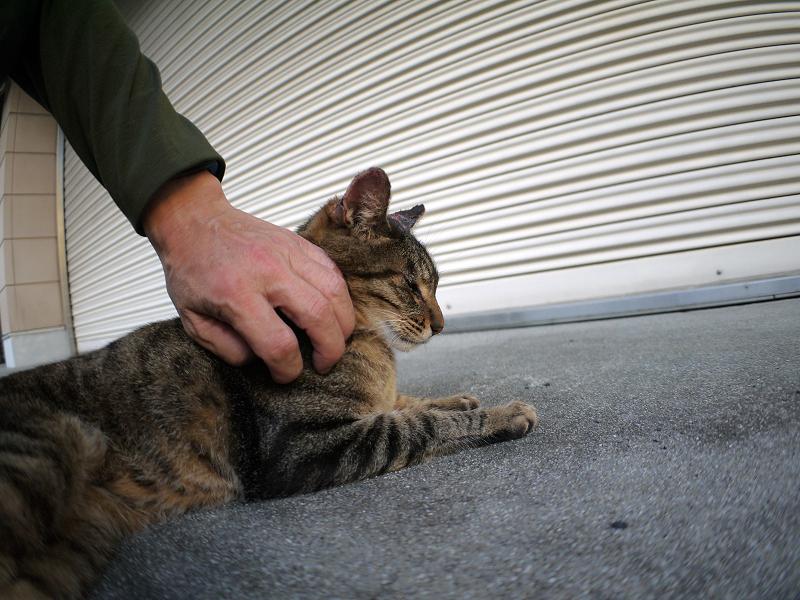 シャッター前のキジトラ猫1