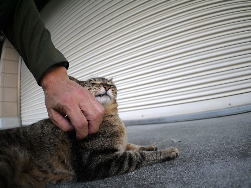 シャッター前のキジトラ猫2