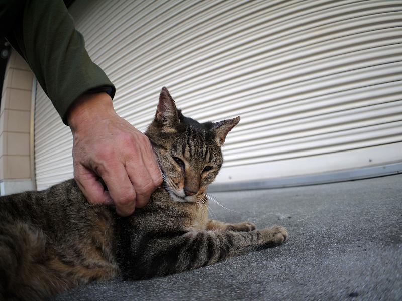 シャッター前のキジトラ猫3