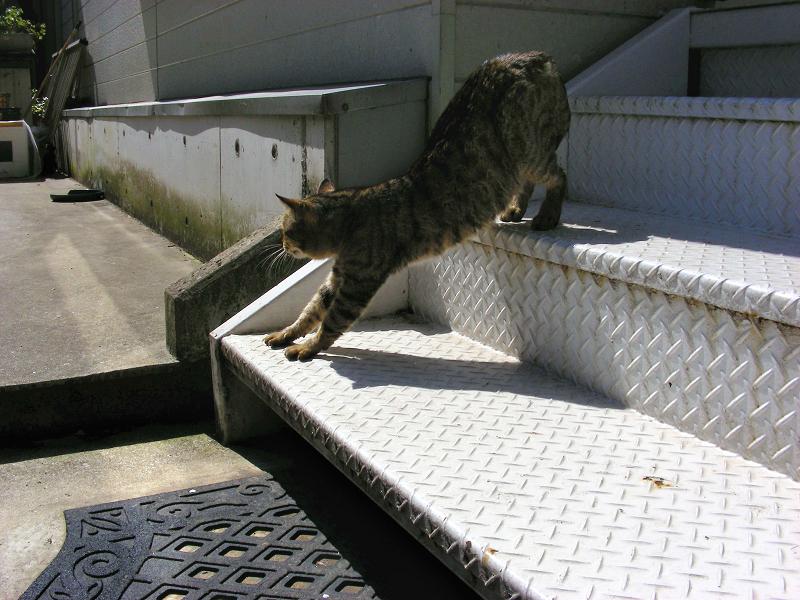 階段から降りてきたキジトラ猫1