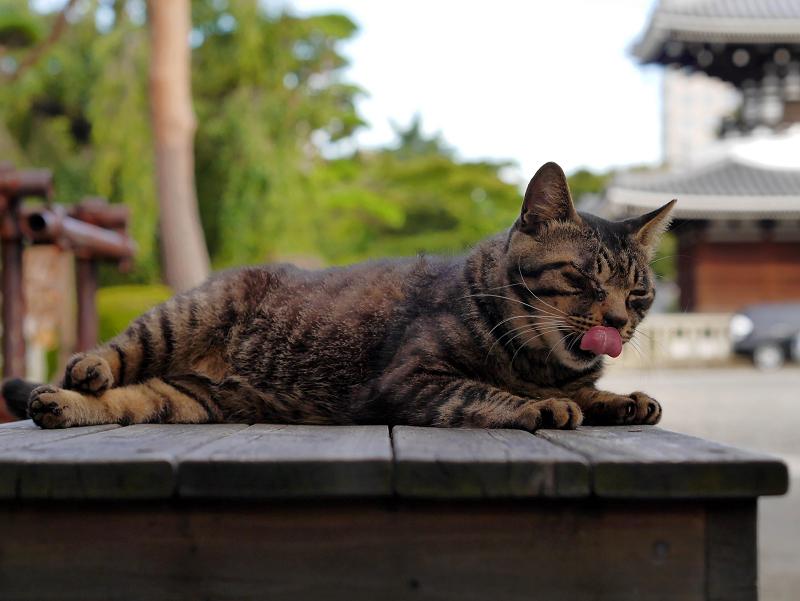 境内ベンチとキジトラ猫3