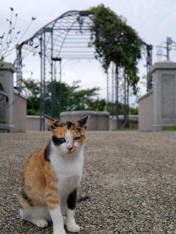 公園と三毛猫1