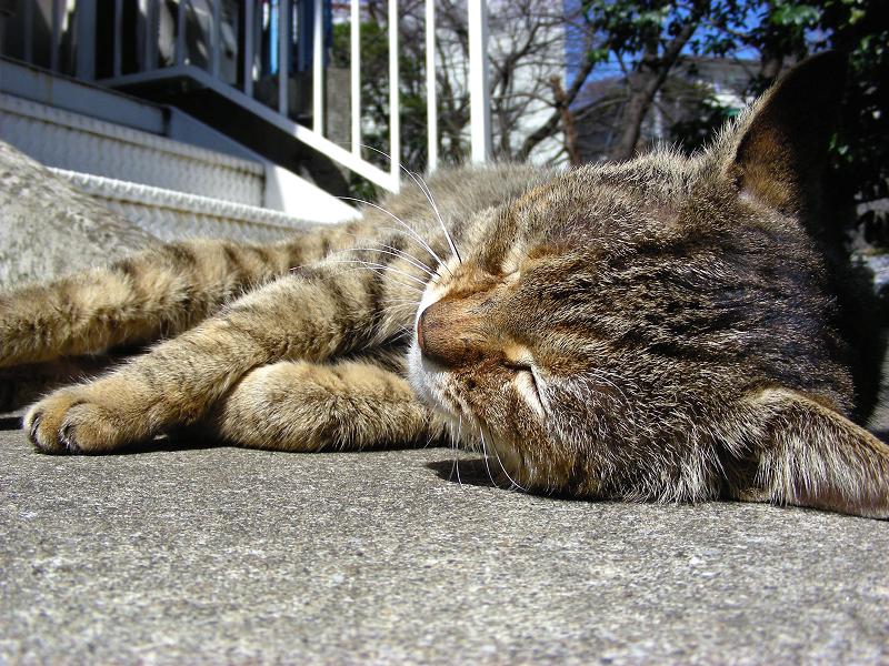 足元で寝てるキジトラ猫2