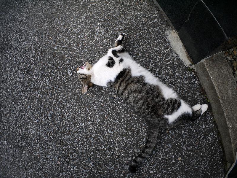 足元で寝てるキジ白猫3