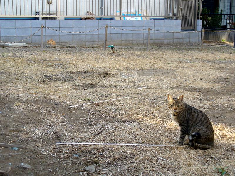 空き地の猫たち1