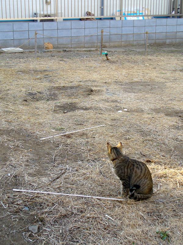 空き地の猫たち2