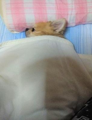 えん 寝かされる 1