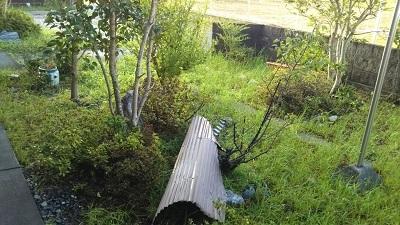 台風後 庭 トタン