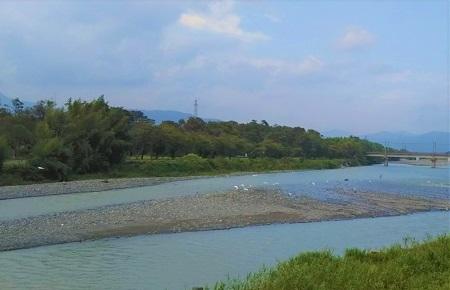 安曇川 鳥