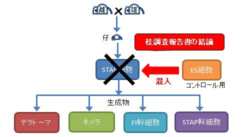 STAP細胞実験-4