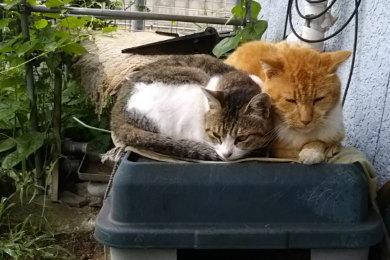 猫小屋の上でくっつく2匹