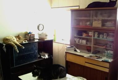 猫たちに占拠された台所