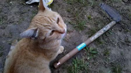草刈りするBossを応援する茶トラ「にんじん」