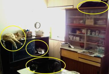 台所を占拠した猫たちに○印