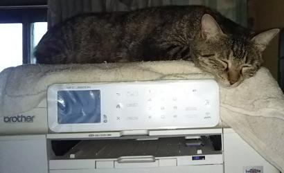 プリンターの上で寝る渦巻き柄「あや」