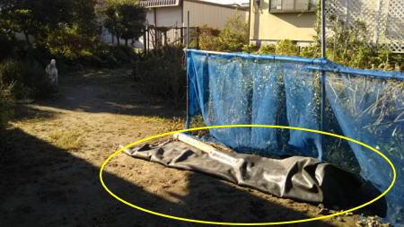 台風一過の朝、庭の防草シートは半分めくれてしまった
