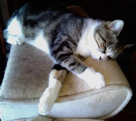 熟睡中の渦巻き柄「まり」