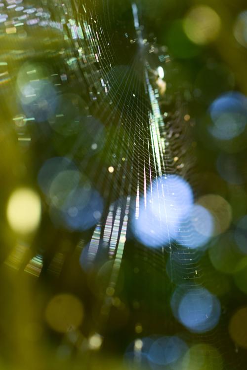 spiderweb_2018_8_27_3.jpg