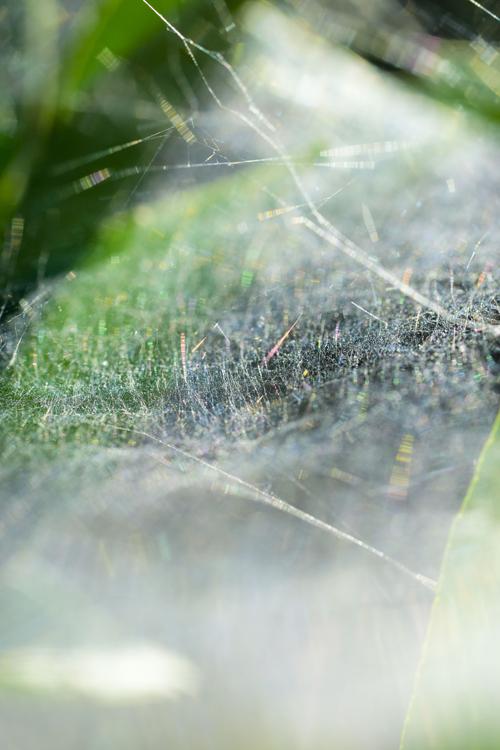 spiderweb_2018_8_27_5.jpg