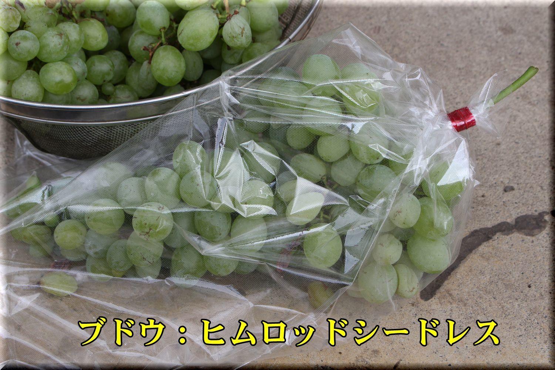 1himuro180811_001.jpg