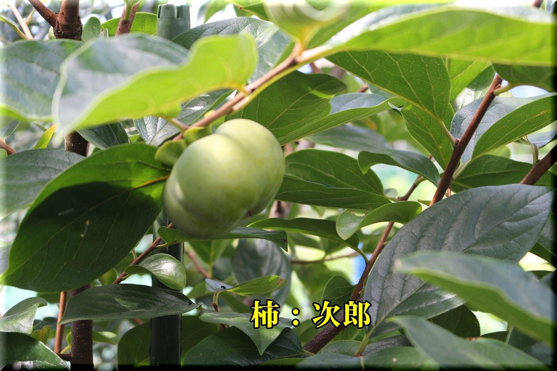 1jirou180827_026.jpg