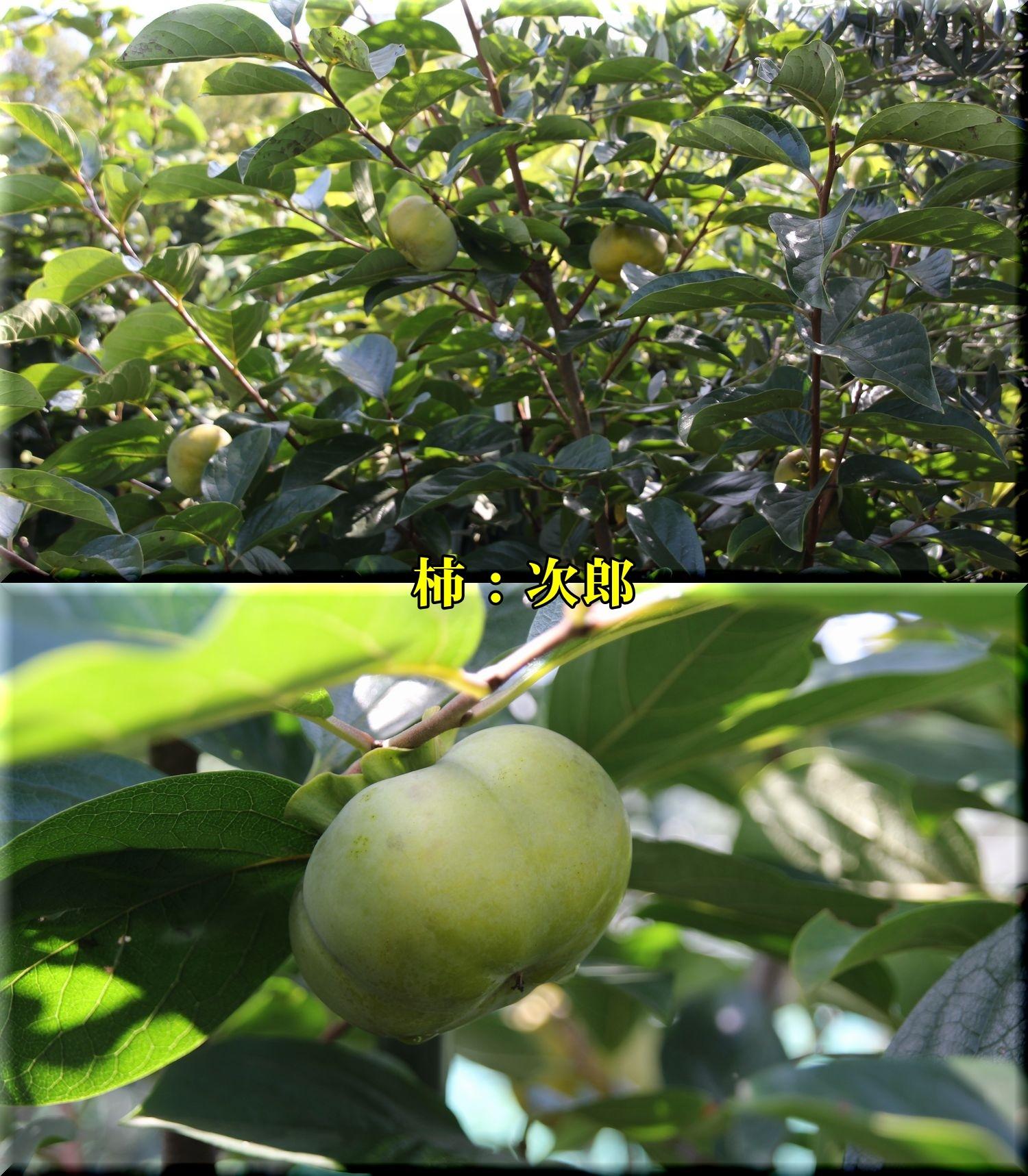 1jirou180919_016.jpg