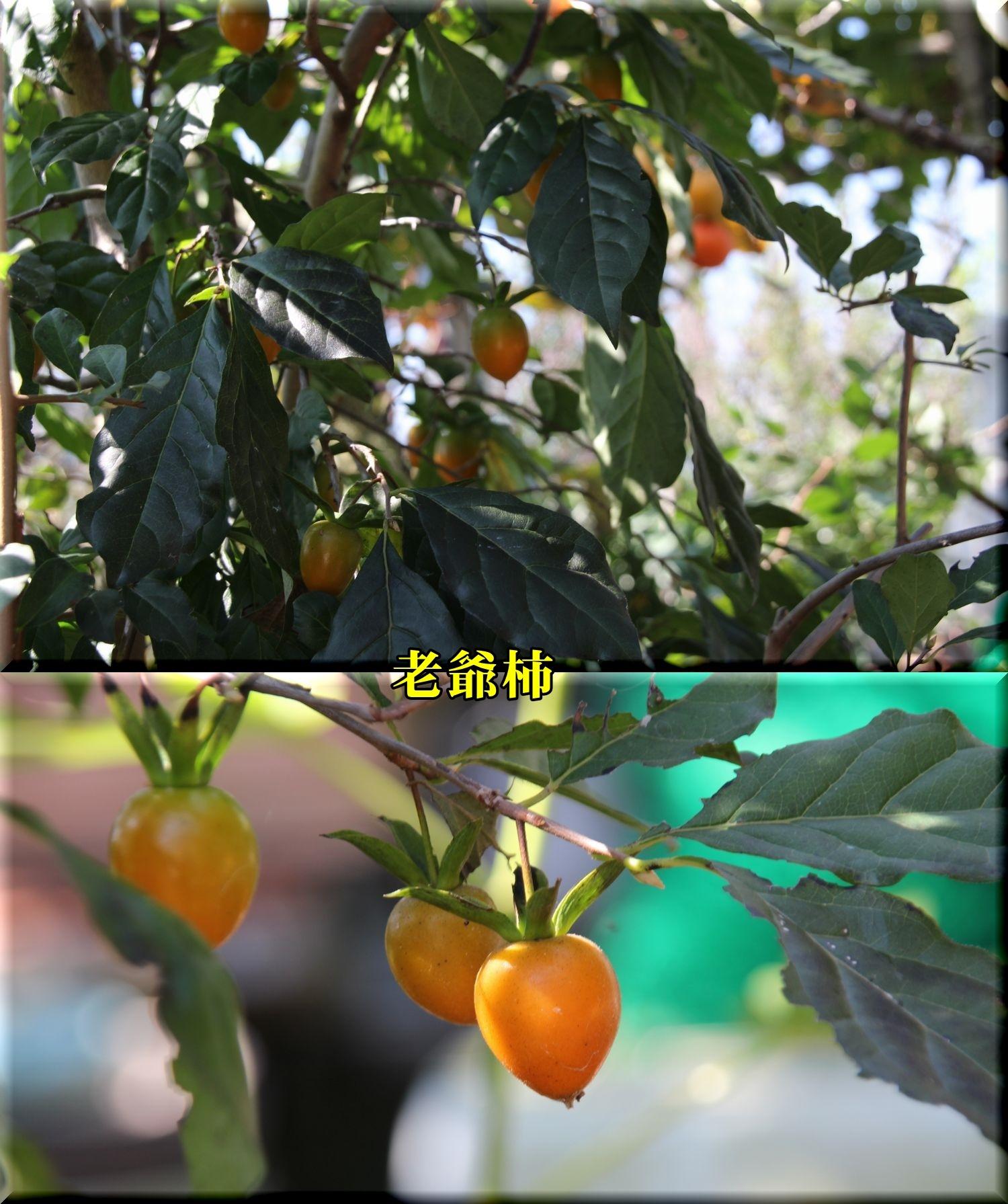 1rouyagaki181010_027.jpg