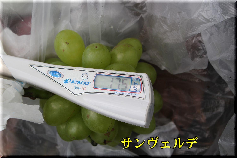 1sanV180816_004.jpg