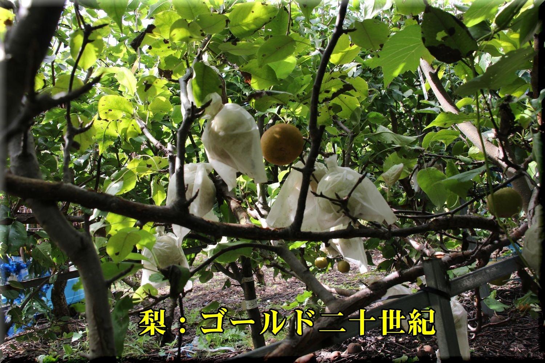 1seiki180913_002.jpg