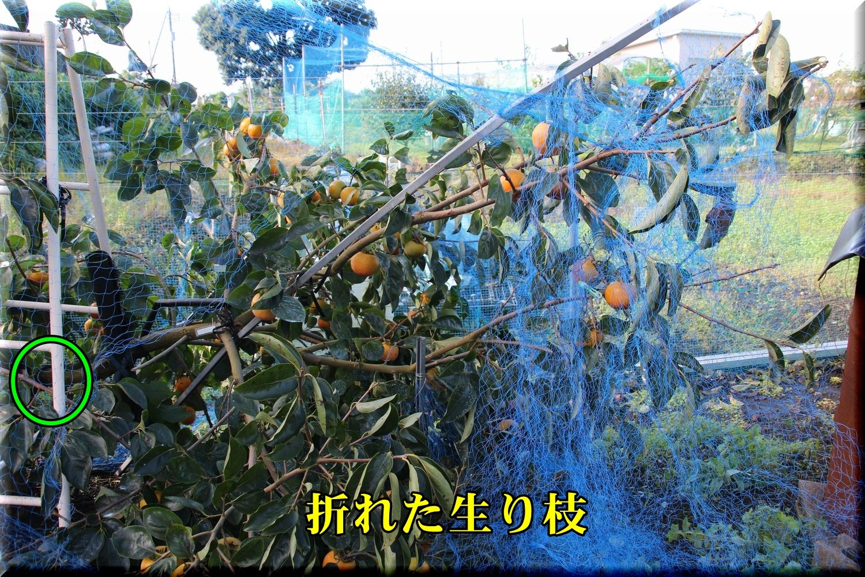 1soudawase181001_010.jpg