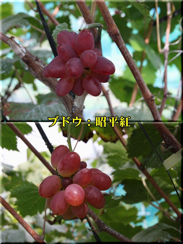 1syouheikou180911_008.jpg
