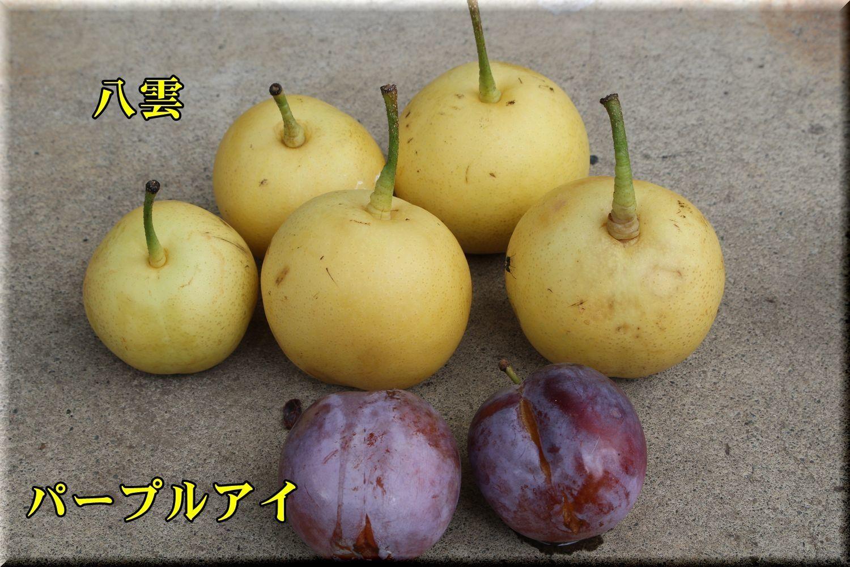 1yakumo180811_002.jpg