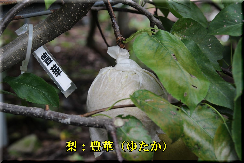 1yutaka180911_018.jpg