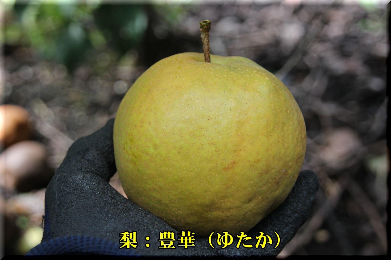 1yutaka180913_009.jpg