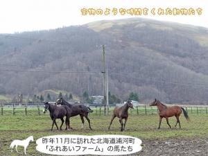 昨年11月に訪れた北海道浦河町「ふれあいファーム」の馬たち