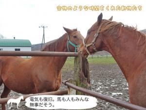 電気も復旧。馬も人もみんな無事だそう。