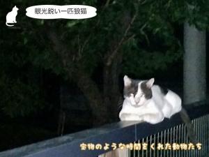 眼光鋭い一匹狼猫