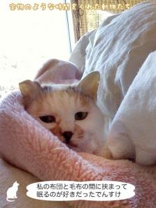 私の布団と毛布の間に挟まって眠るのが好きだったでんすけ
