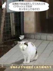 玄関前でお出迎えしてくれた三毛(フラッシュで目が光っちゃってるけど)