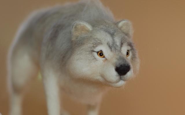 オオカミ展2018ハイイロー3