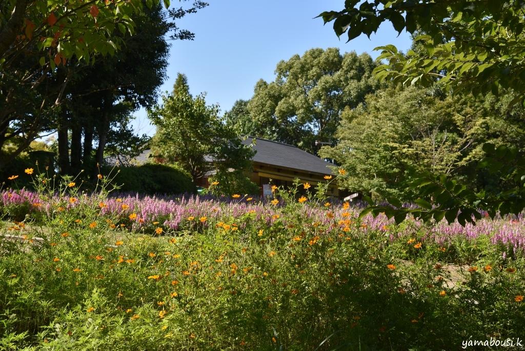 福智山ろく花公園 2