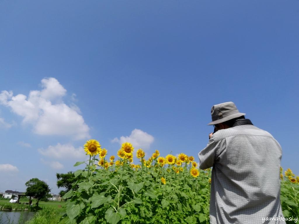 ひょうたん島公園 ひまわりの笑顔 4